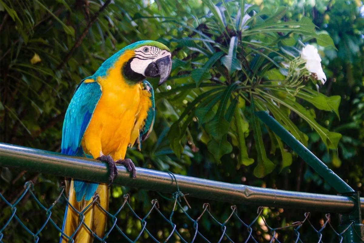 parc ornithologique villars les dombes