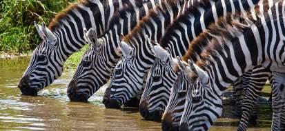 zebres touroparc